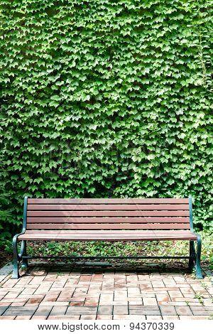 Ivy And Bench A La Portrait