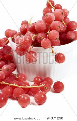Currants, Frozen In White Bowl