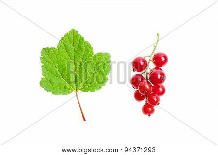 Redcurrant and green leaf.