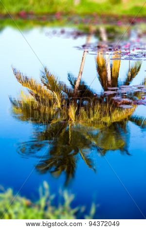 Reflection of coconut trees on tropical pond water Tobago