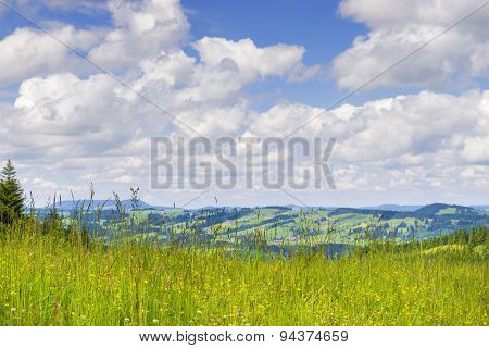 Meadow To Allgaeu