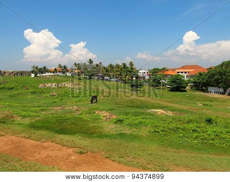 View of fields at Fort Galle, Sri-Lanka