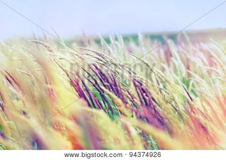 Beautiful high grass and blue sky