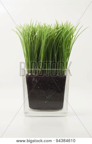 Grass In Transparent  Rectangular Glass Vase.