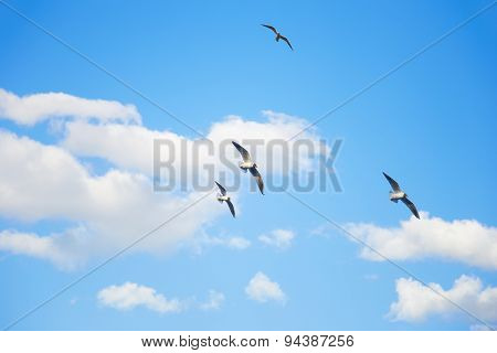 Seagulls Flying In The Sky Among The Clouds