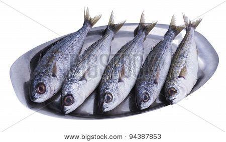 Fish Bogue
