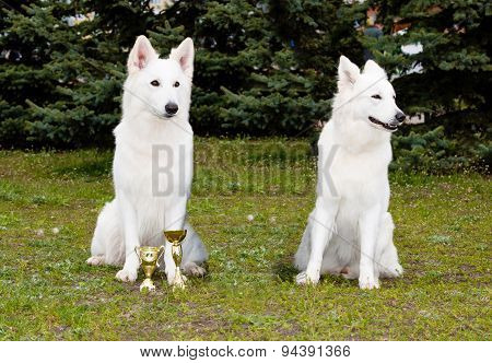 One White Shepherd won, other lost.