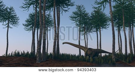 mamenchisaurus walking in araucaria grove