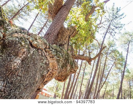Forest Tree Embrace