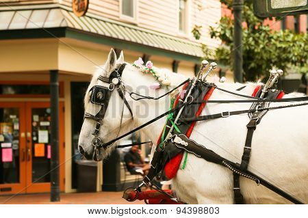 The Well Decorated Carriage Horse