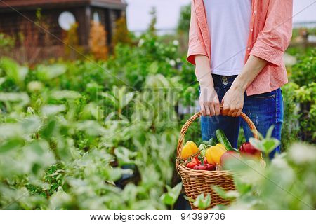 Basket with various vegetables held by female farmer