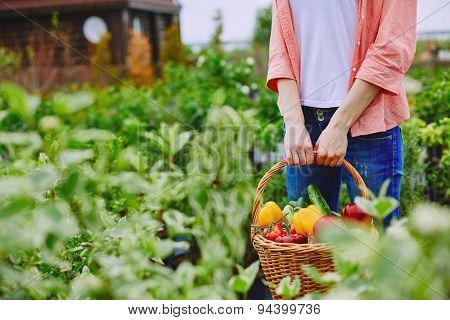 Basket with various vegetables held by female farmer