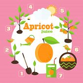picture of apricot  - Vector illustration of a garden in the style of the flat - JPG