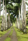foto of  habits  - France the Habitation Clement park in Martinique - JPG