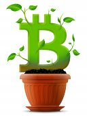 image of bitcoin  - Stylized plant in shape of bitcoin sign in ground - JPG