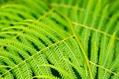 stock photo of fern  - fern photo close up perfectly useable as backround - JPG