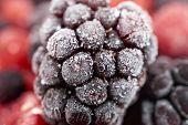 foto of frozen  - Macro shot of a frozen blackberry on other frozen berry fruits - JPG