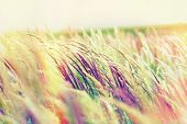 picture of grassland  - Beautiful nature  - JPG