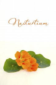 pic of nasturtium  - Small bouquet of edible orange nasturtium flowers and leaves on white wood rustic table for floral or salad ingredient - JPG