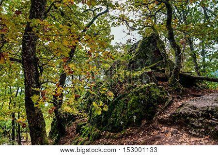 Beautiful Autumnal Forest Details, Natural Landscape
