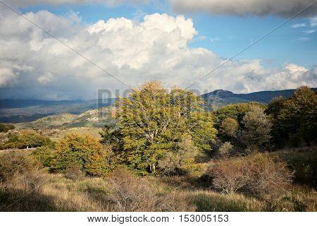 mountain landscape autumnal color, Nebrodi Park - Sicily