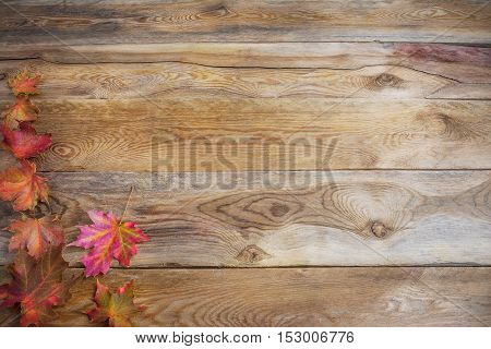 Thanksgiving concept with fall colorful maple leaves on wooden background. Thanksgiving background with seasonal vegetables and fruits. Fall background. Copy space