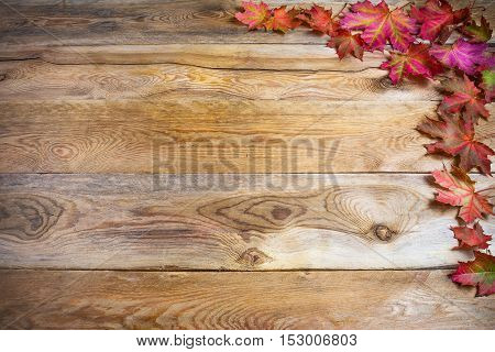 Thanksgiving greeting with fall vivid maple leaves on rustic wooden background. Thanksgiving background with seasonal vegetables and fruits. Copy space