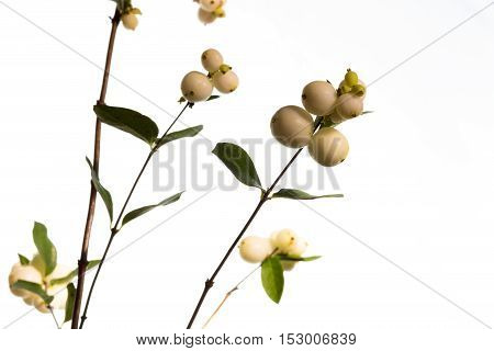 Sprig of field flowers with fruits. Spring flowering. Shallow depth of field.
