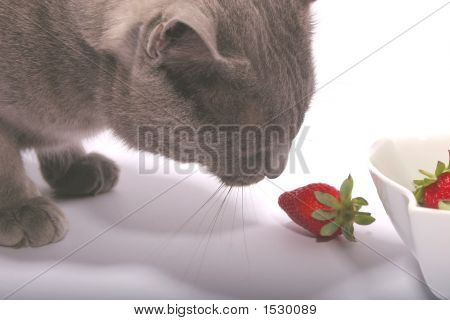 Gray Cat & Strawberry