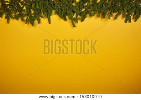 Yellow background with fir tree branches. Chrismas and New Year.
