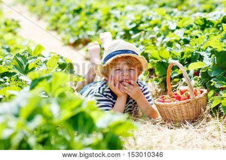 Funny blond little kid boy picking and eating strawberries on organic bio berry farm in summer, on warm sunny day. Harvest fields in Europe.