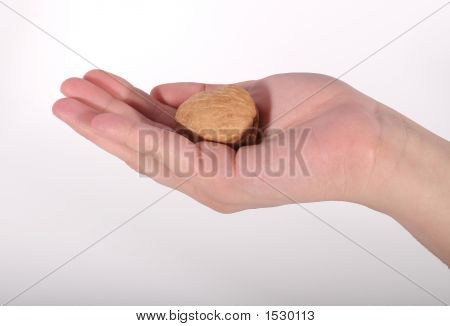 Walnut Cradled In Hand
