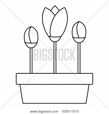 Tulips in planter icon. Outline illustration of tulips in planter vector icon for web