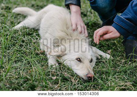 Kids Stroke a White Dog Lying on the Grass