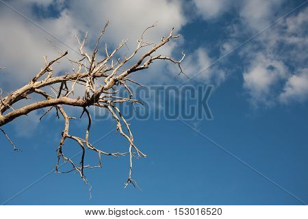 Dead Tree Branches Against Blue Sky