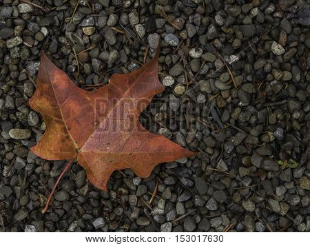 One red maple leaf on bed of gravel in lower left of frame
