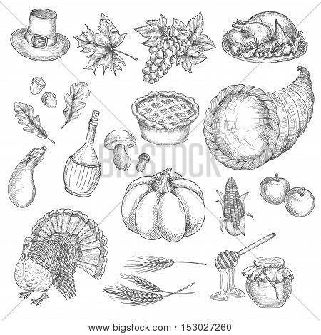 Thanksgiving sketch vector isolated icons of traditional celebration. Thanksgiving turkey, cornucopia, pumpkin, vegetables harvest, grape bunch, corn, pilgrim hat. Decoration symbol elements for thanksgiving greeting cards
