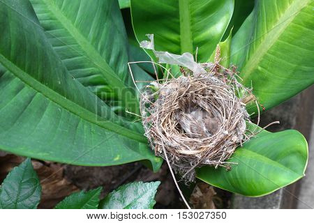 baby bird sparrow in natural nest on tree