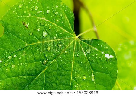 A green leaf with small water drops on it