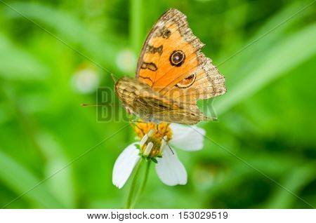 animal, animals, beautiful, beauty, butterfly, close-up, closeup, color, colorful, colors, colour, day, flower, freedom, grass, green, image, insect, leaf, life, light, macro, nature, orange, outdoor, outdoors, peace, plant, season, small, spring, summer,