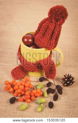 Vintage Photo, Autumn Decoration With Cup Wrapped Scarf And Woolen Cap On Burlap