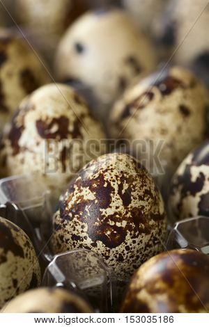 Fresh raw quail eggs in egg box photographed with natural light (Selective Focus Focus on the front of the egg one third into the image)