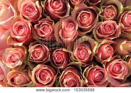 Pink roses in a floral wedding arrangement