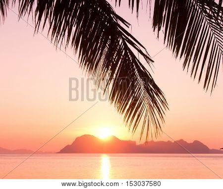 Fiery Backdrop Coconut Horizon