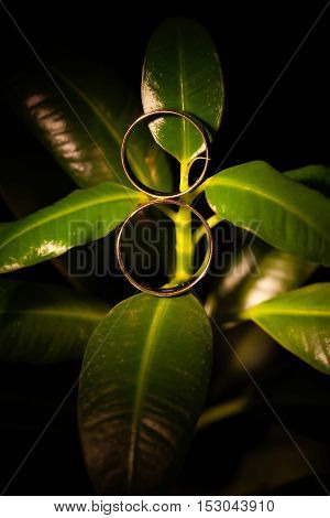 Wedding rings on a green plant in a beam of light.