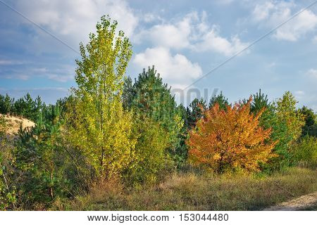 Autumn forest and colorful trees with green red and yellow leaves