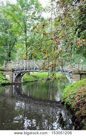 bunches of Rowan berries in autumn Park looms over the quiet river with the old bridge