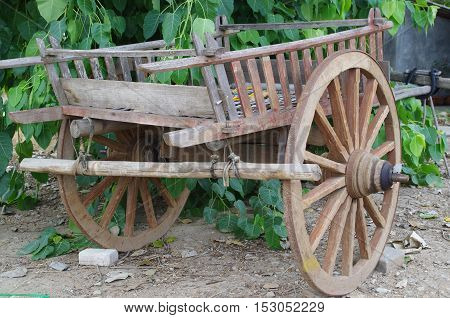 Old two wheel small wooden ox cart on a dirt lot with some large leaf greenery behind.
