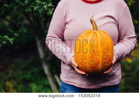 Ripe, Organic, Orange Pumpkin In The Hands. Sunny Fall Day. A Yo