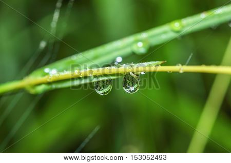 Dew drops on green grass leaf background